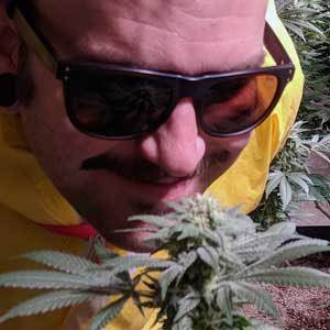 smelling cannabis